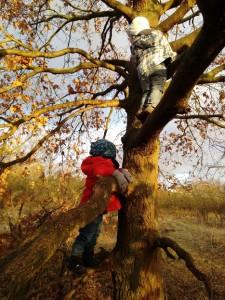 Baum klettern